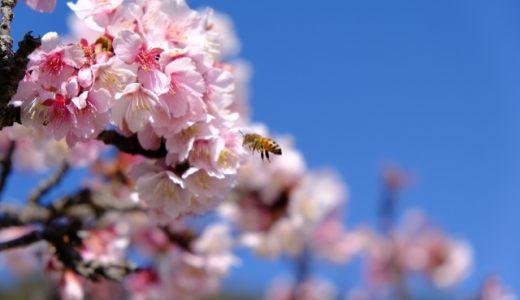 【リトミック@流山】親子リトミック向け♪春のお歌であそぼう🌸ぶんぶんぶんdeリトミック#YouTube動画レッスン